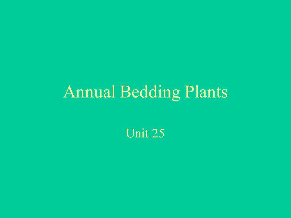 Annual Bedding Plants Unit 25