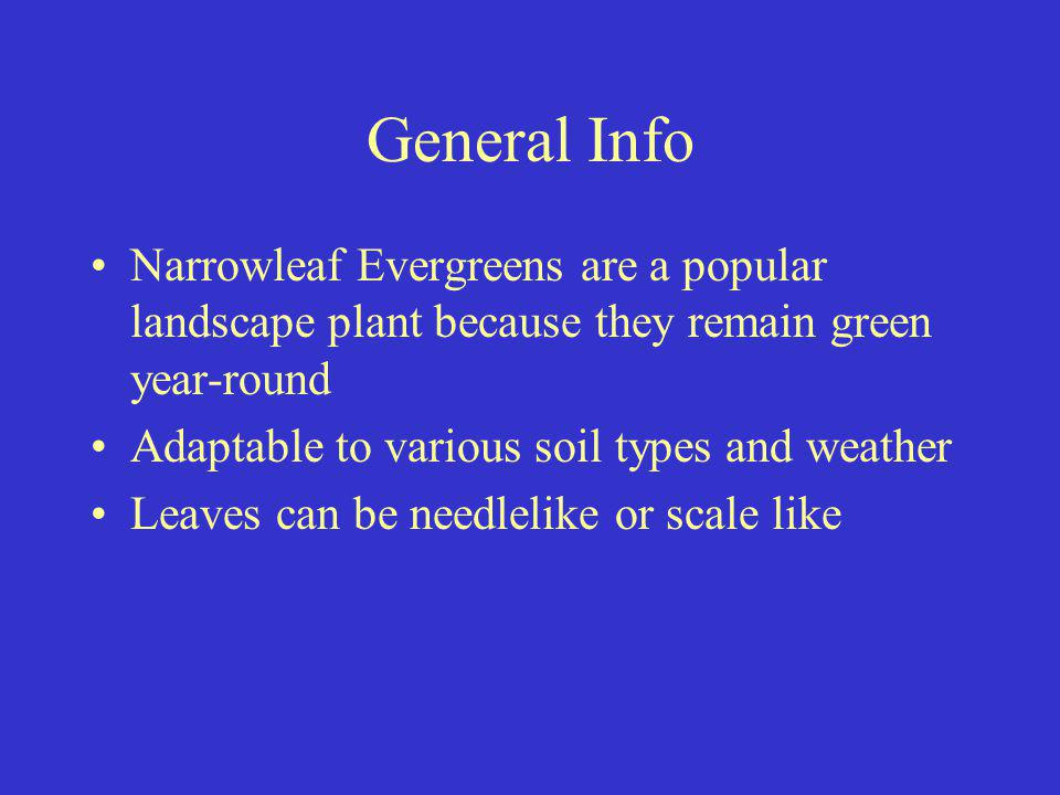 General Info Narrowleaf Evergreens are a popular landscape plant because they remain green year-round.