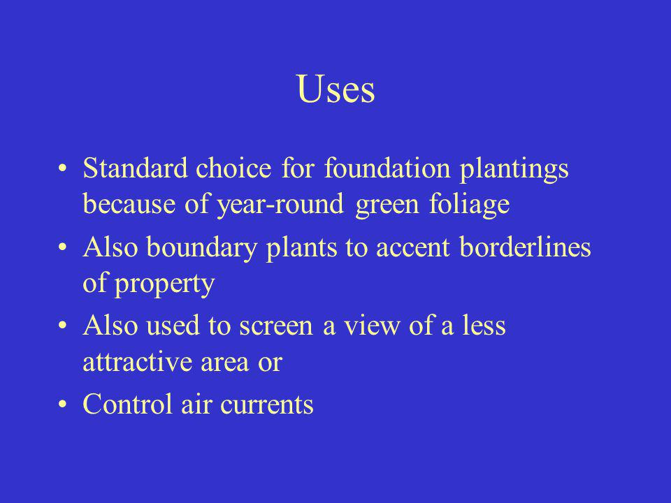 Uses Standard choice for foundation plantings because of year-round green foliage. Also boundary plants to accent borderlines of property.
