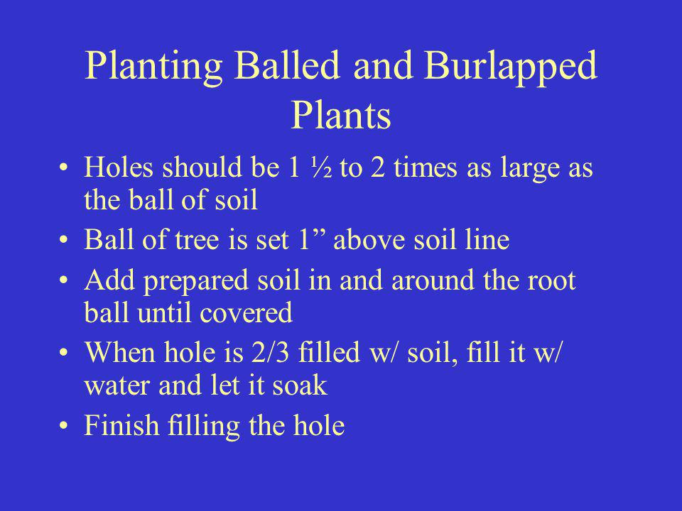Planting Balled and Burlapped Plants