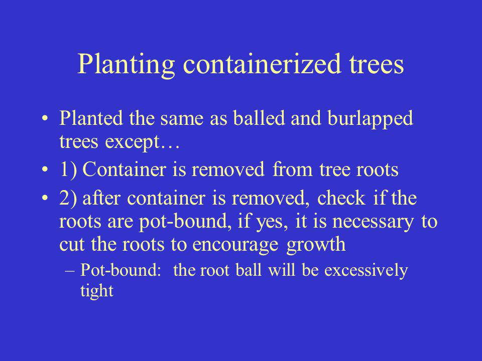 Planting containerized trees