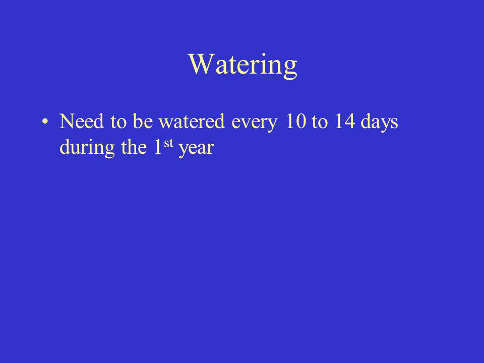 Watering Need to be watered every 10 to 14 days during the 1st year
