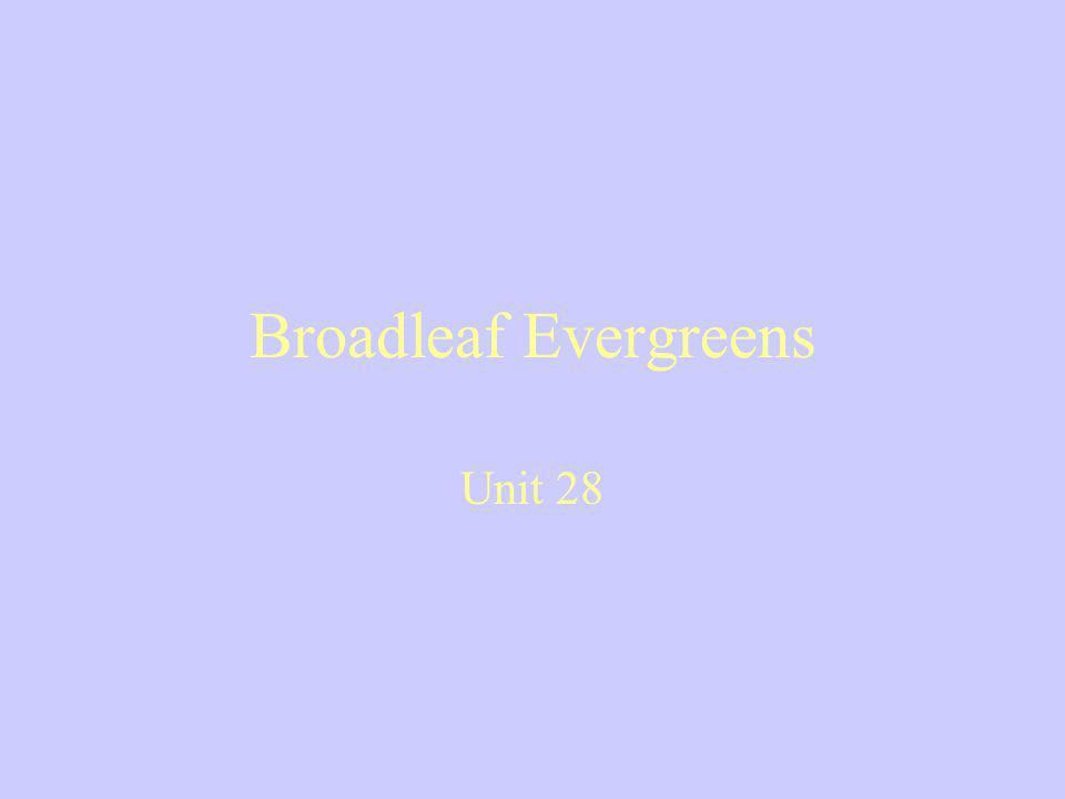 Broadleaf Evergreens Unit 28