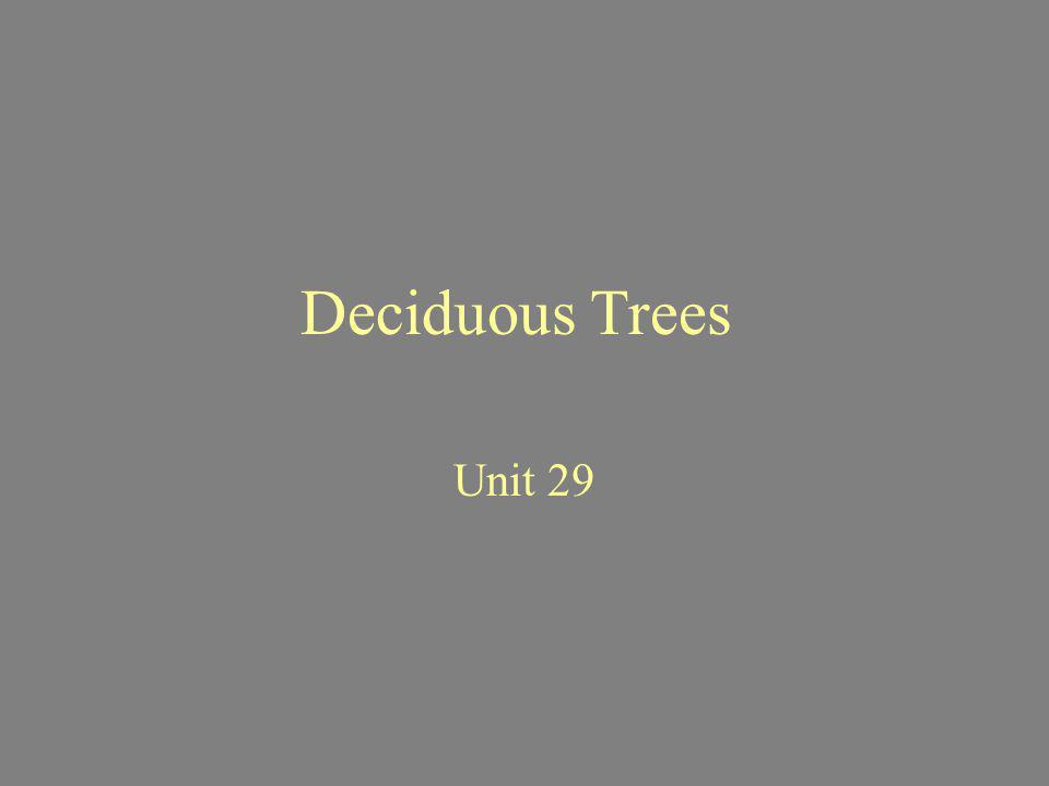 Deciduous Trees Unit 29