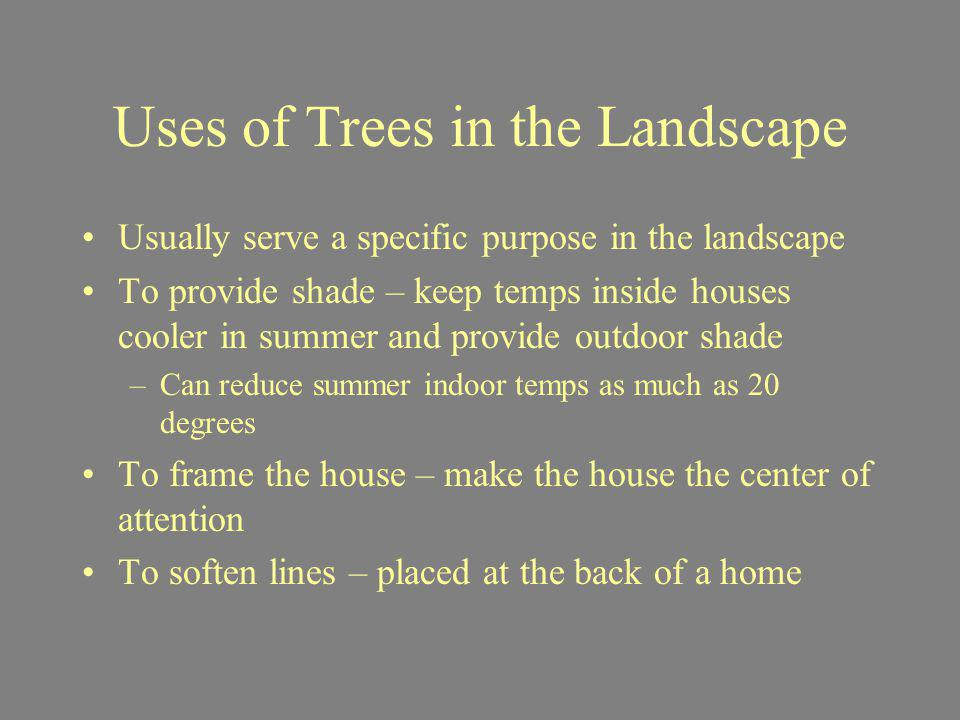 Uses of Trees in the Landscape