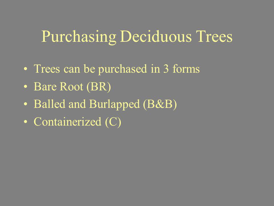 Purchasing Deciduous Trees