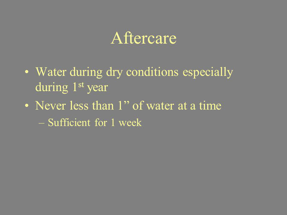 Aftercare Water during dry conditions especially during 1st year