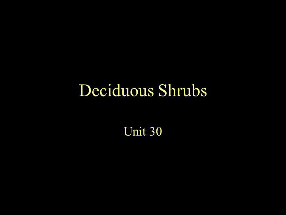 Deciduous Shrubs Unit 30