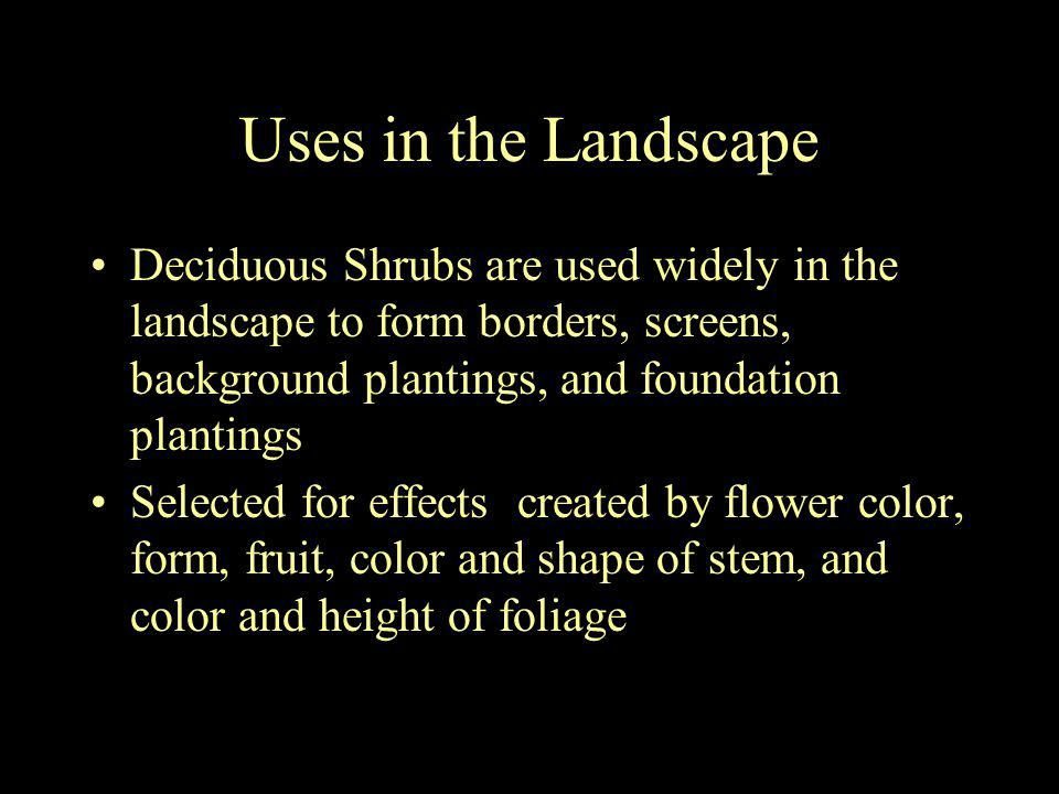 Uses in the Landscape Deciduous Shrubs are used widely in the landscape to form borders, screens, background plantings, and foundation plantings.