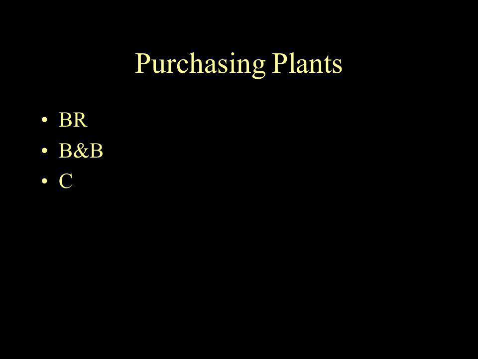 Purchasing Plants BR B&B C