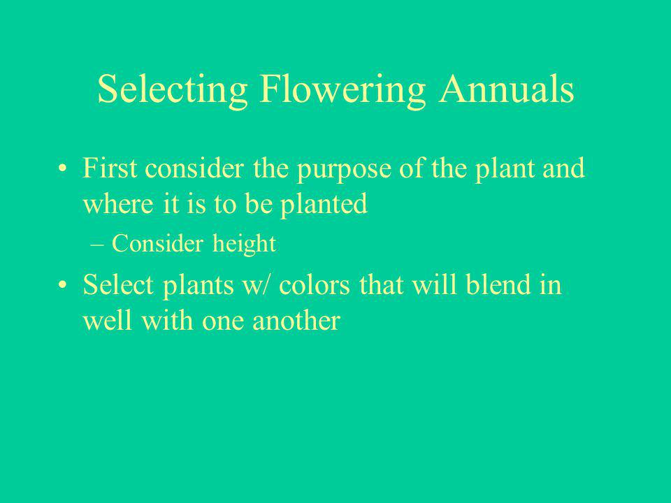 Selecting Flowering Annuals