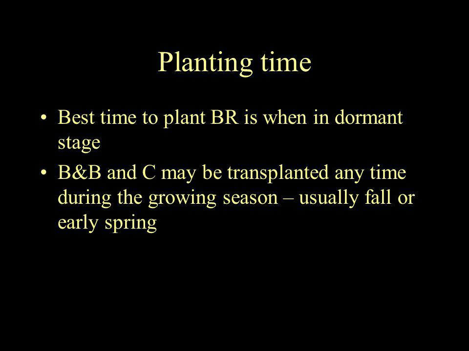 Planting time Best time to plant BR is when in dormant stage