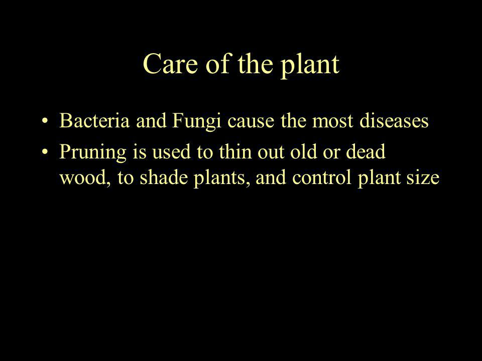 Care of the plant Bacteria and Fungi cause the most diseases