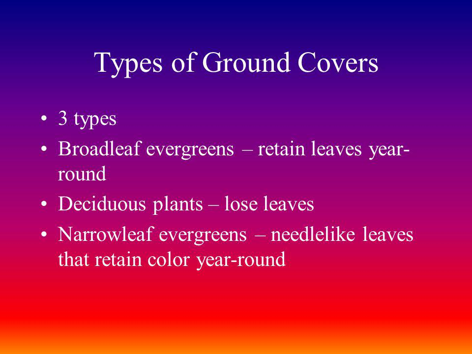 Types of Ground Covers 3 types