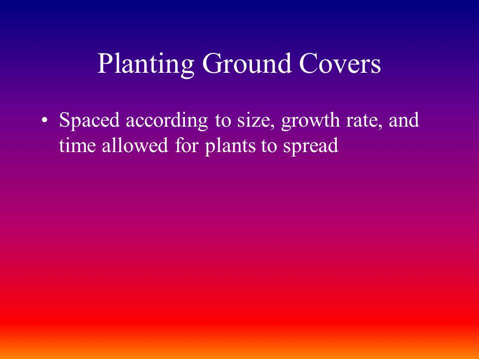 Planting Ground Covers