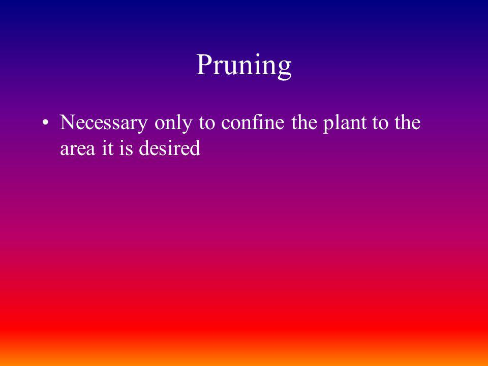 Pruning Necessary only to confine the plant to the area it is desired