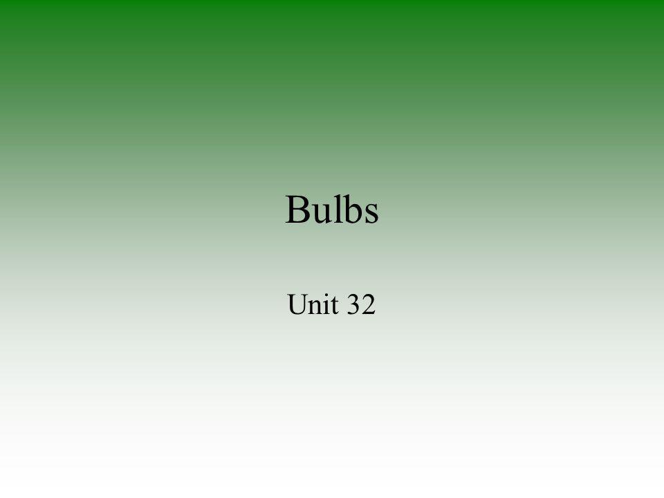 Bulbs Unit 32