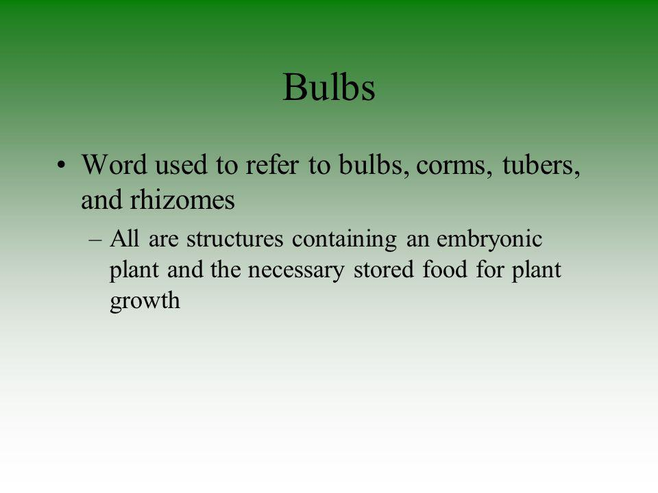 Bulbs Word used to refer to bulbs, corms, tubers, and rhizomes