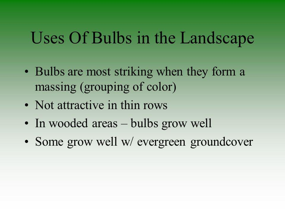 Uses Of Bulbs in the Landscape