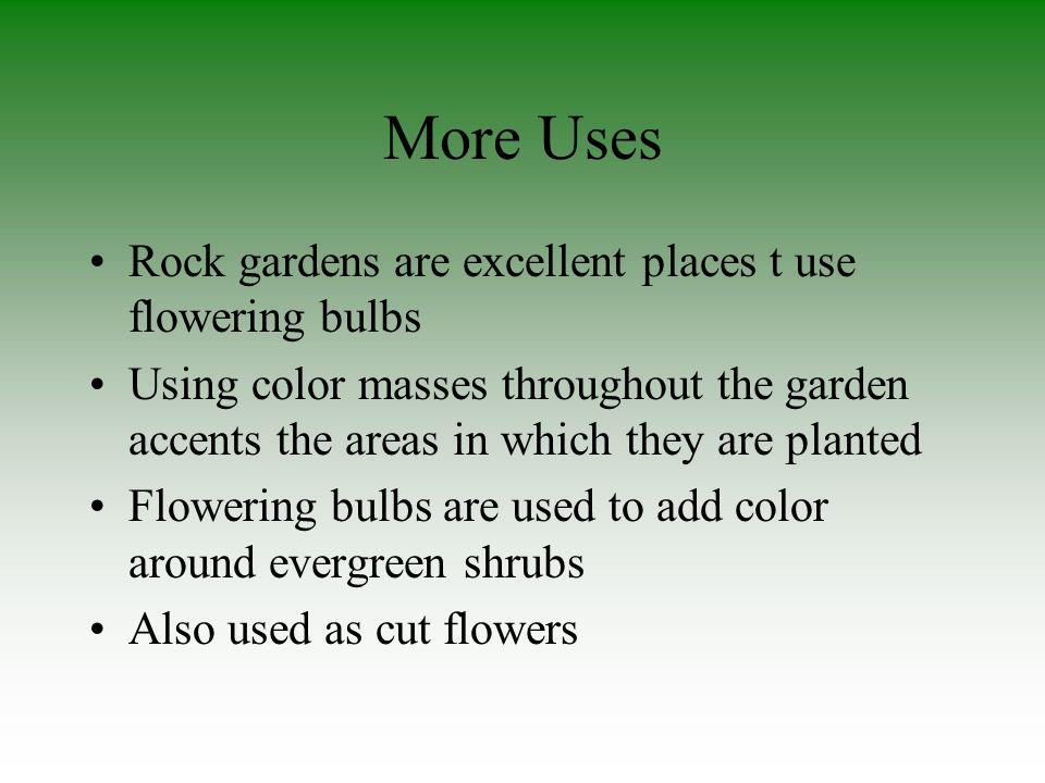 More Uses Rock gardens are excellent places t use flowering bulbs