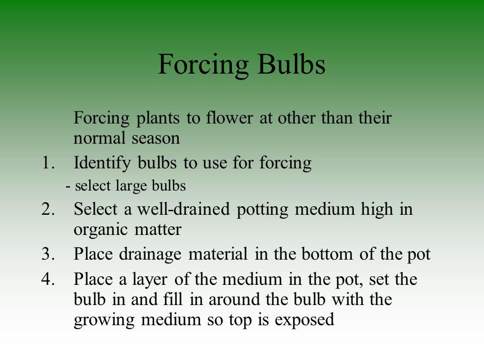 Forcing Bulbs Forcing plants to flower at other than their normal season. Identify bulbs to use for forcing.