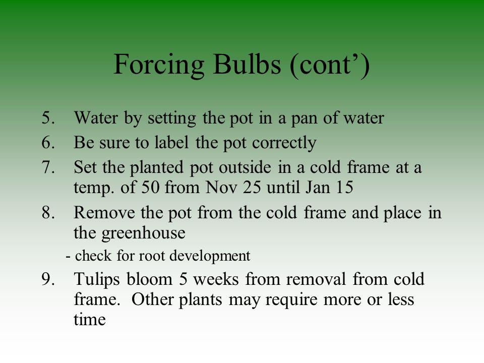 Forcing Bulbs (cont') Water by setting the pot in a pan of water