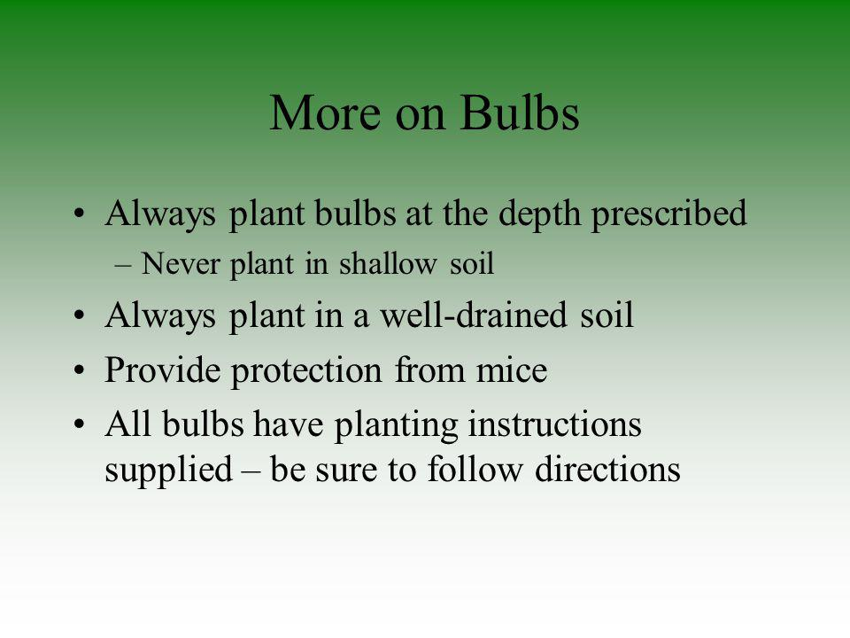 More on Bulbs Always plant bulbs at the depth prescribed