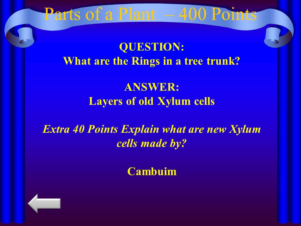 Parts of a Plant – 400 Points