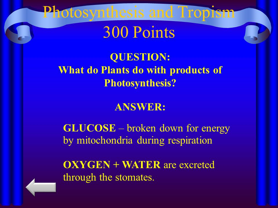 Photosynthesis and Tropism 300 Points