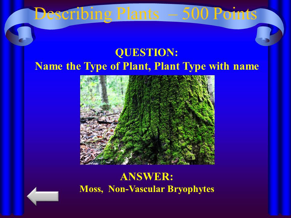 Describing Plants – 500 Points