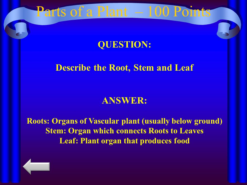 Parts of a Plant – 100 Points