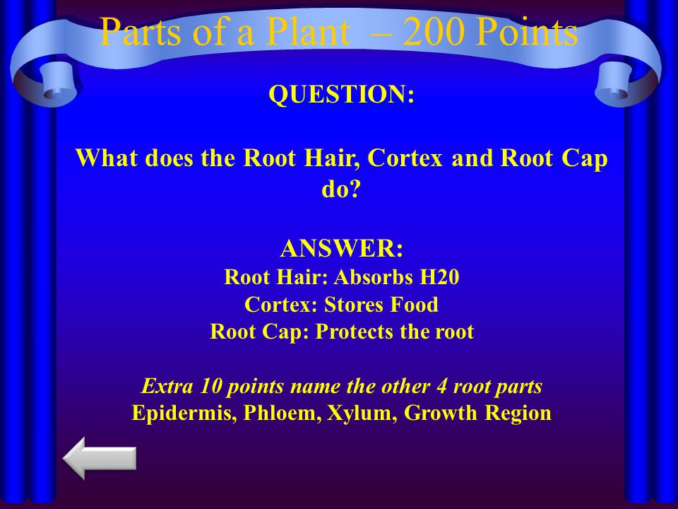 Parts of a Plant – 200 Points