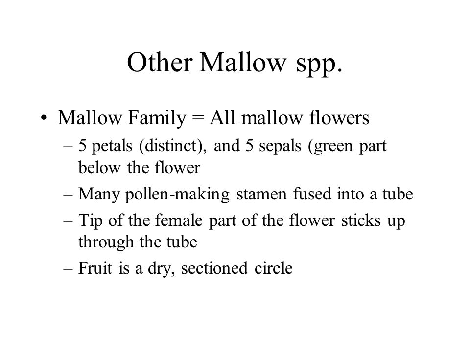 Other Mallow spp. Mallow Family = All mallow flowers