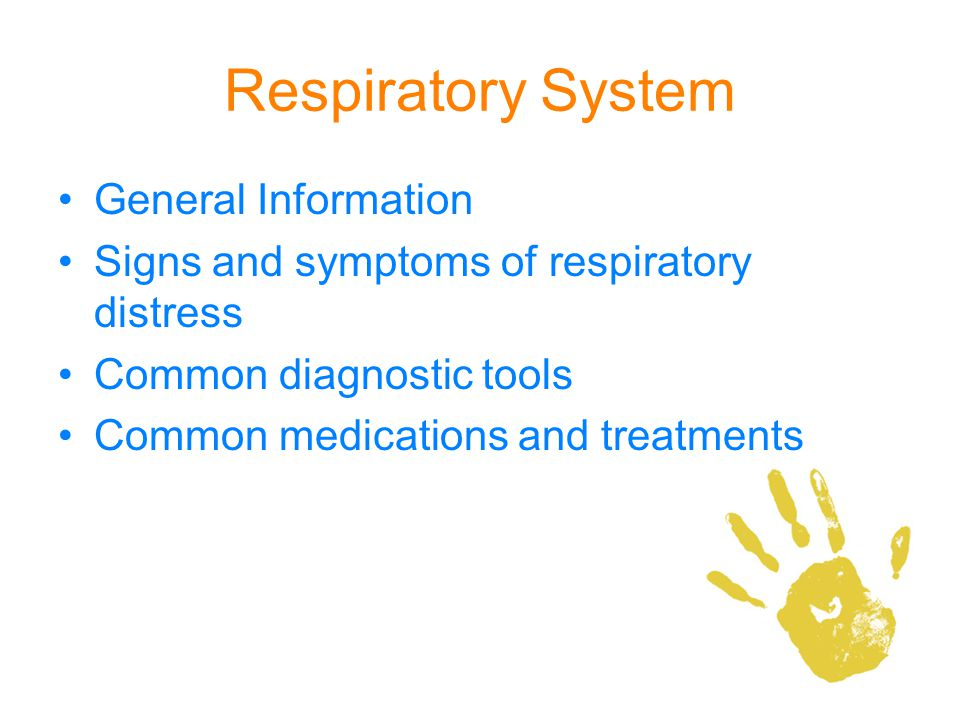 Respiratory System General Information