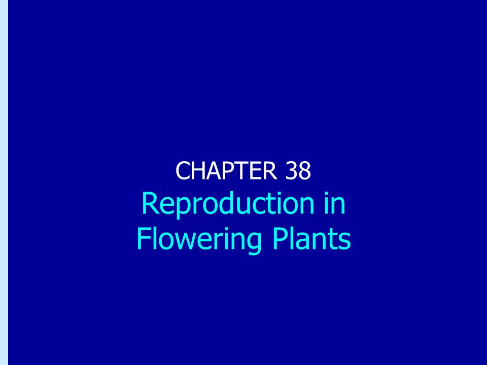 CHAPTER 38 Reproduction in