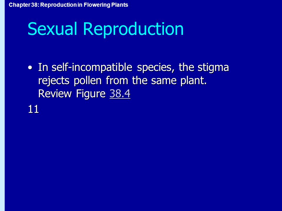 Sexual Reproduction In self-incompatible species, the stigma rejects pollen from the same plant. Review Figure 38.4.