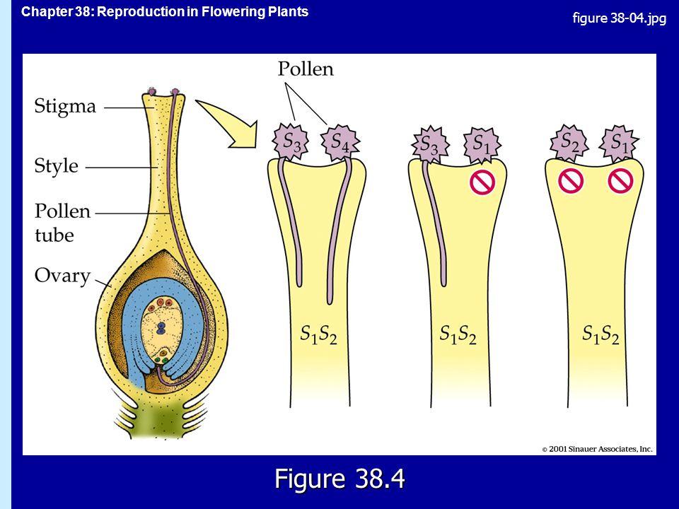 figure 38-04.jpg Figure 38.4 Figure 38.4