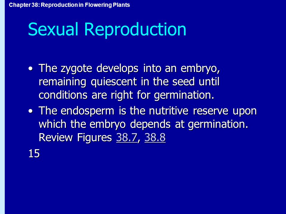 Sexual Reproduction The zygote develops into an embryo, remaining quiescent in the seed until conditions are right for germination.