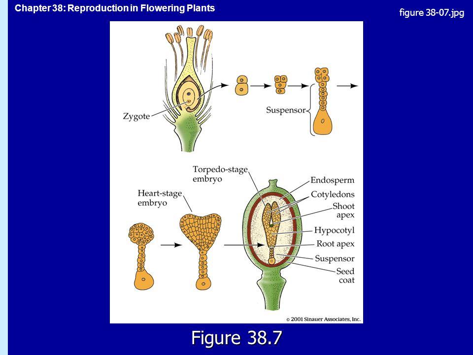 figure 38-07.jpg Figure 38.7 Figure 38.7