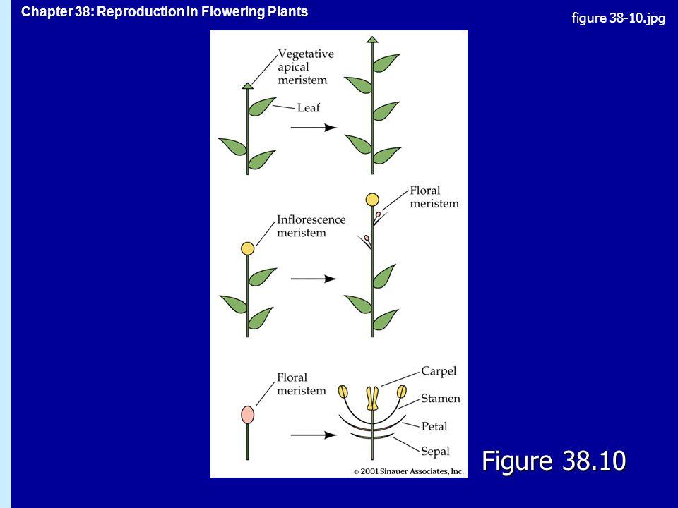 figure 38-10.jpg Figure 38.10 Figure 38.10
