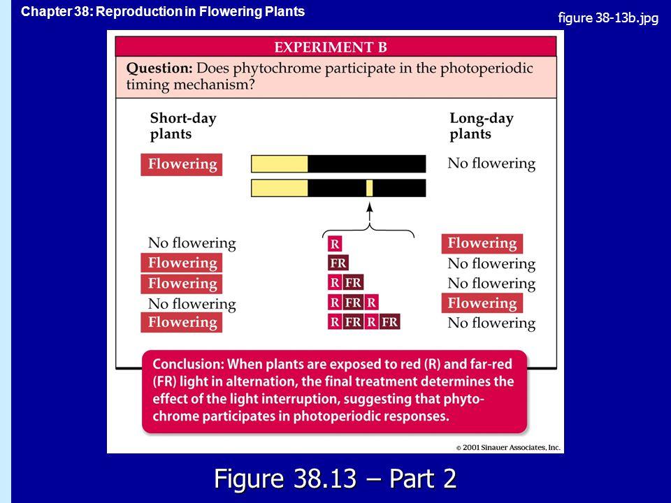 figure 38-13b.jpg Figure 38.13 – Part 2 Figure 38.13 – Part 2