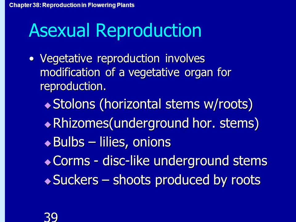 Asexual Reproduction Stolons (horizontal stems w/roots)
