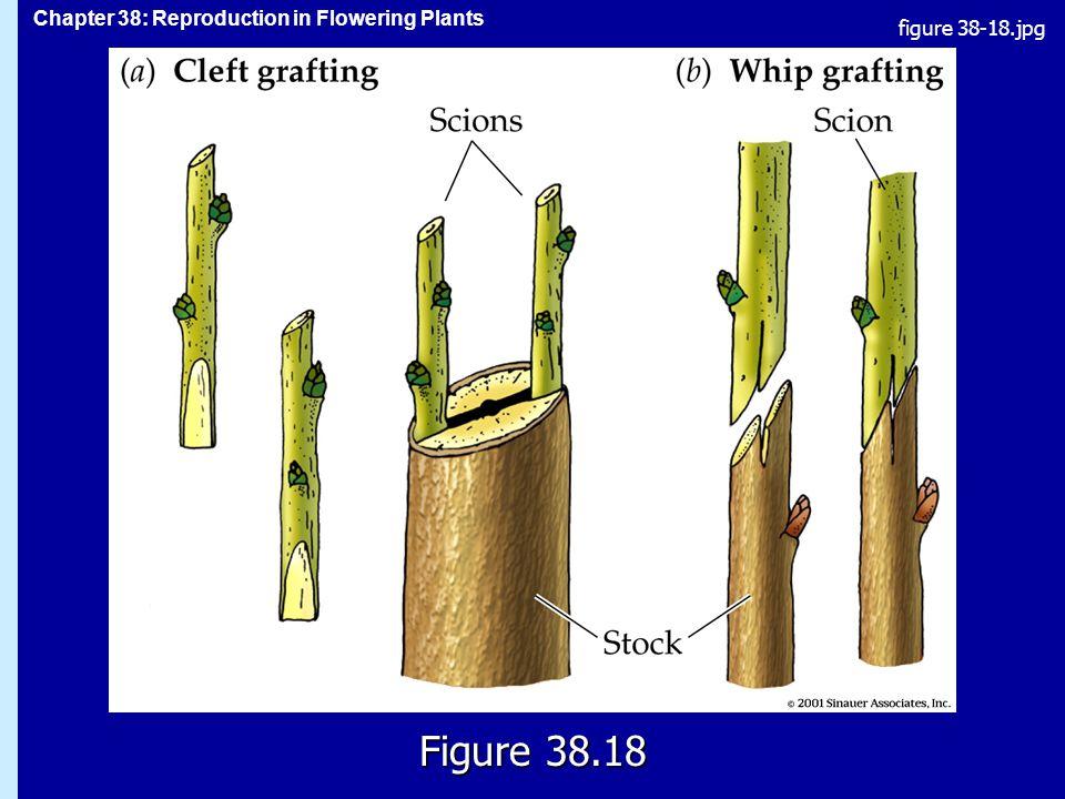 figure 38-18.jpg Figure 38.18 Figure 38.18