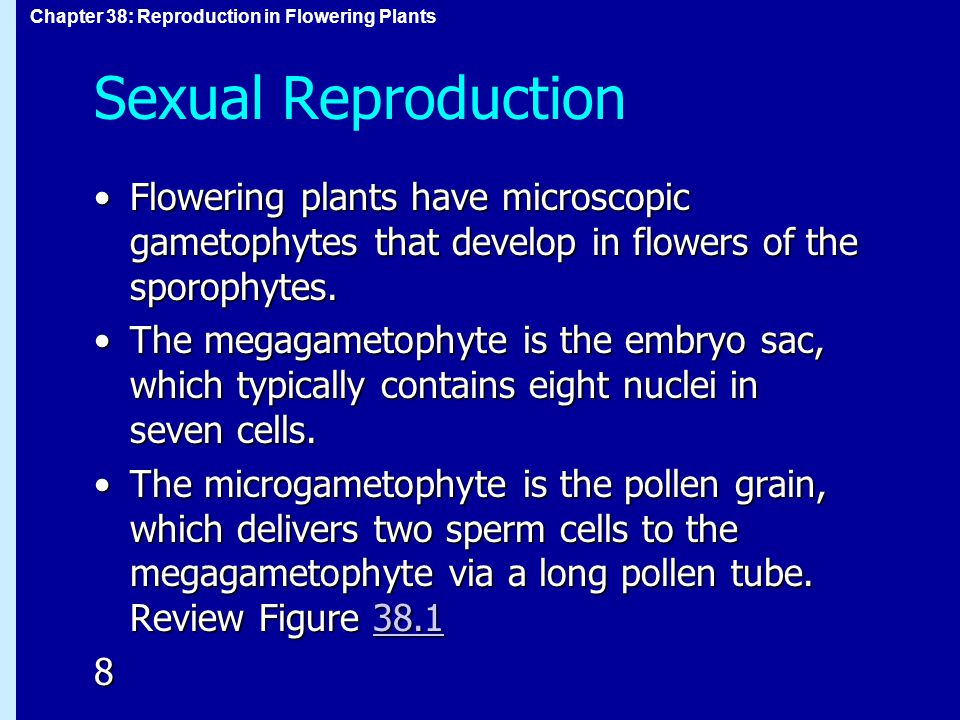 Sexual Reproduction Flowering plants have microscopic gametophytes that develop in flowers of the sporophytes.
