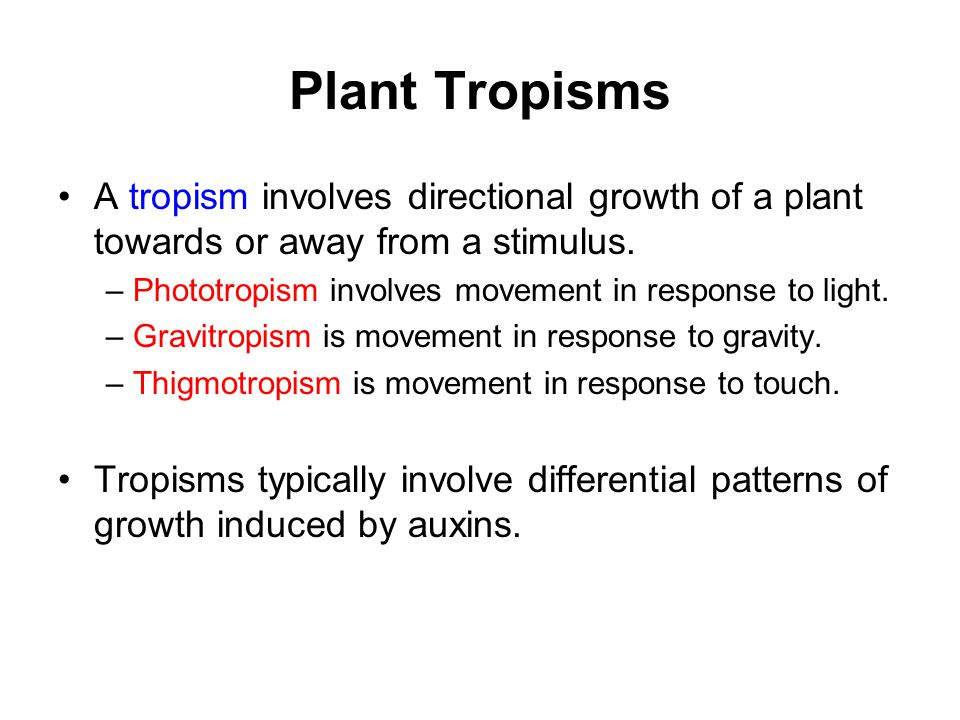 Plant Tropisms A tropism involves directional growth of a plant towards or away from a stimulus.