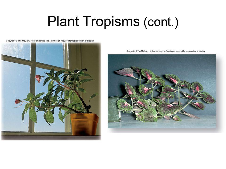 Plant Tropisms (cont.)