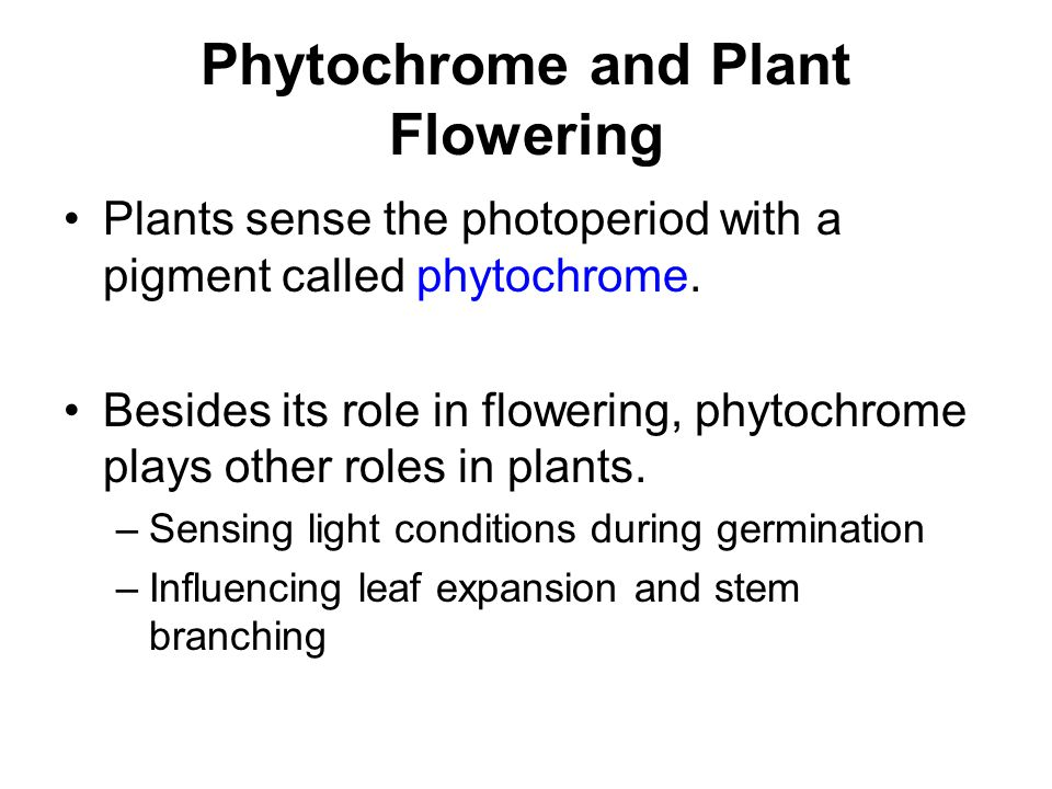 Phytochrome and Plant Flowering