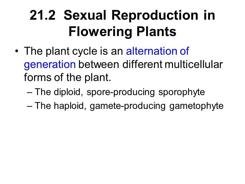 21.2 Sexual Reproduction in Flowering Plants