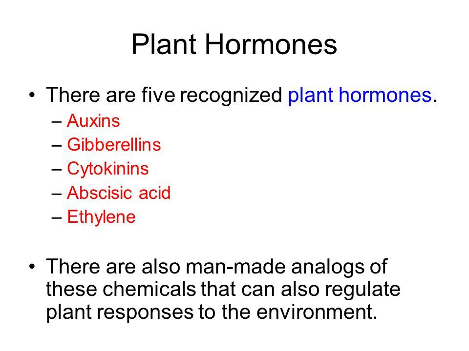 Plant Hormones There are five recognized plant hormones.