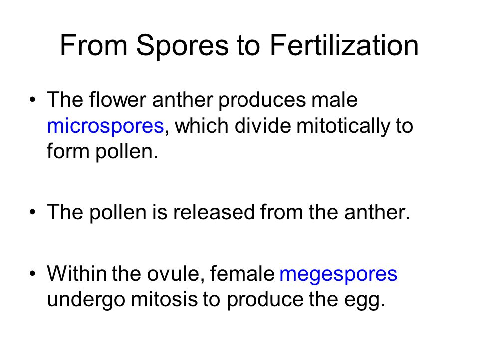From Spores to Fertilization